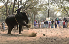National zoo suspends elephant rides