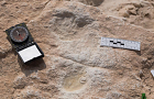Human footprints dating back 120,000 years found in Saudi Arabia
