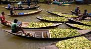 Floating Guava Market of Jhalakathi