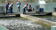 IPRS promises booming fish production in...
