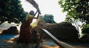 In pictures: Joy of bumper Aman harvest