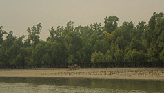 Committee warns of disaster from Sundarbans...