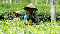 Tea garden workers observe Tea Labourers...