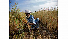 Agrarian reforms in Pakistan