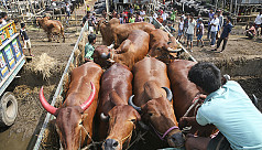 20 cattle markets to open Wednesday
