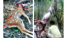 Deer hunting on the rise in...