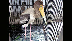 1,457 endangered birds, animals recovered in Chittagong