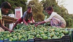 Verdant oranges dominate Bandarban...
