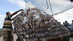 Ilish production boom encourages export...