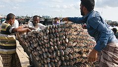 Rain hikes Ilish prices despite soaring...
