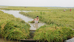 Bangladesh to speed up rice imports...