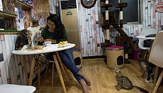 Pet cafe trend cat-ching on in...