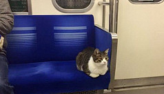 Cat casually rides the subway by...