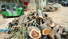 DNCC contractors chop down trees in...