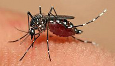 Dengue in Dhaka on the rise