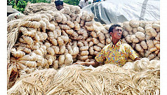 Jute prices in Magura controlled by...