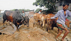 Lessees ignore city's cattle market...