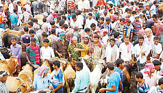 Prices of native cattle up in...