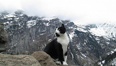 Rescued on the Swiss Alps by a Cat