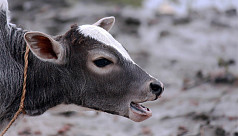 Of sacrificing animals and being...