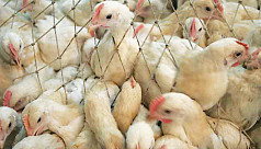 Plan to export poultry by 2020