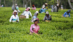 Tea workers deprived of  fair-price...