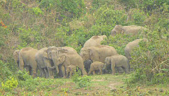 Bangladesh-India agreement on 'elephant...