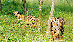 Govt to take tiger density census in...