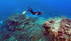 Scientists record biggest ever coral...
