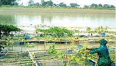 Floating farms bring smile to ultra...
