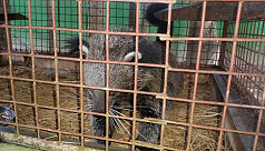 Wounded bearcat treated in...