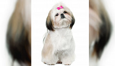 7 easy ways to keep your dog well-groomed...