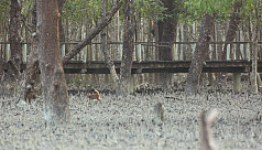 The Sundarbans: Mismanagement having...