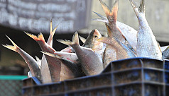Tripura stops fish import from...