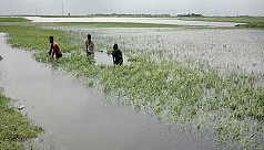 5,000 hectares freshly inundated in...