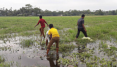 Gopalganj farmers face Tk5cr loss due...