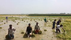 Govt tells Chalan Beel farmers to wait...