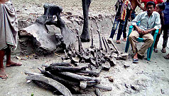 Remains of elephant found in Satkhira...