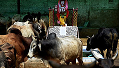 Cows get ambulance service in UP while...