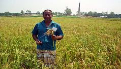 Farmers face huge losses as brick kiln...