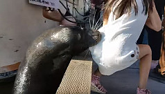 Watch: Sea lion snatching girl from...