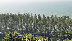 Are the Jhau plantations protecting...