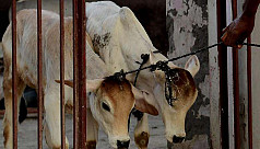 Kerala to challenge Modi's cow slaughter...