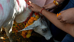 Ban on cow slaughter evokes protests...