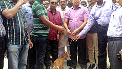 Goat distributed under FCDI project...