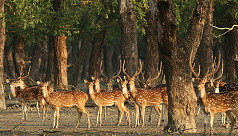 Sundarban and Rampal: An unfortunate...