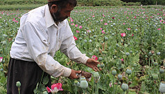 From poppy to heroin: Taliban move into...