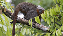 Nearly 400 new species discovered in...