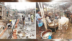 City loses millions on cattle markets