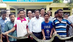 Food crisis forcing pythons to migrate...